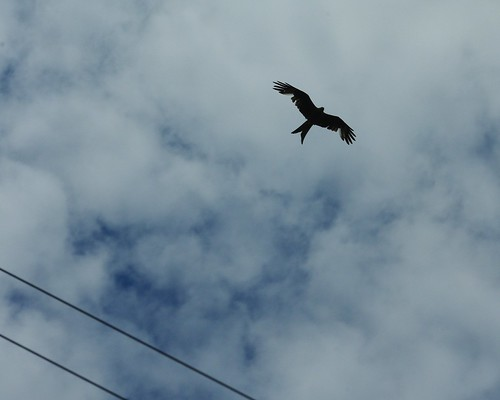 20110717-40_Red Kite - Above Lewknor Village by gary.hadden