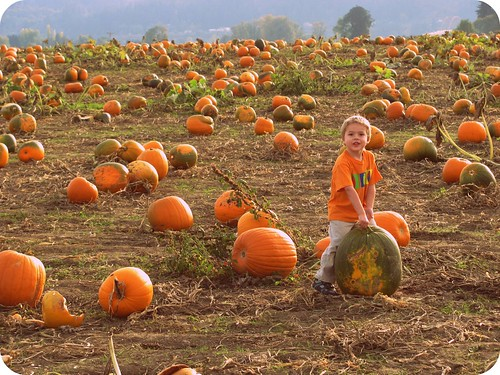 Pumpkin Patch & The Maize at Sauvie Island