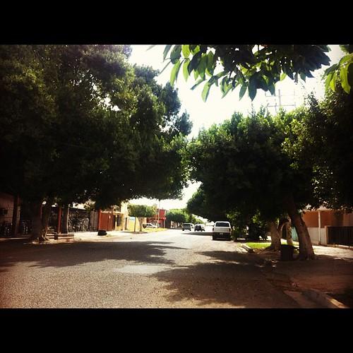 Puebla & 6 de abril... Hace muuuucho que no pasaba por aquí y me dieron muchas ganas de vivir con ese árbol hermoso! by Erika Tamaura
