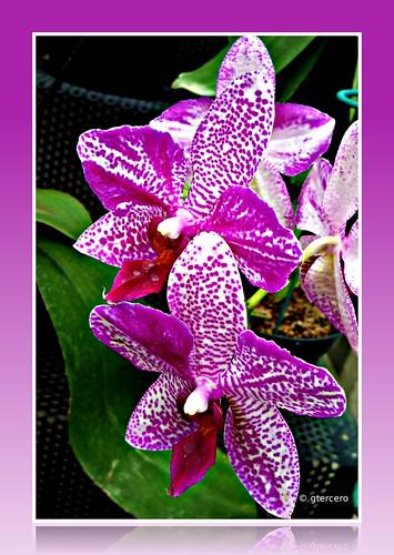 Orquídea, Parque Bicentenario Refinería, Azcapotzalco, México, D. F. P1090059