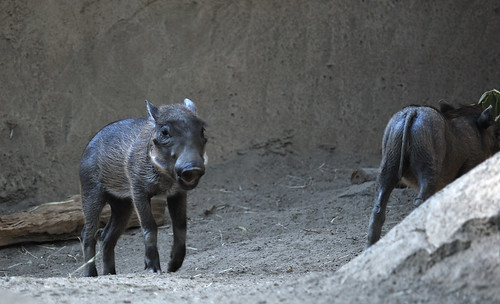 When he was a young warthog... by robmercier00