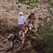 Paso Robles Horse Ranch 5