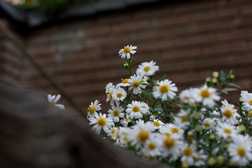 flowers imprisoned