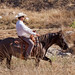 Paso Robles Horse Ranch 3