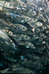 Loro Parque - Fish Tank