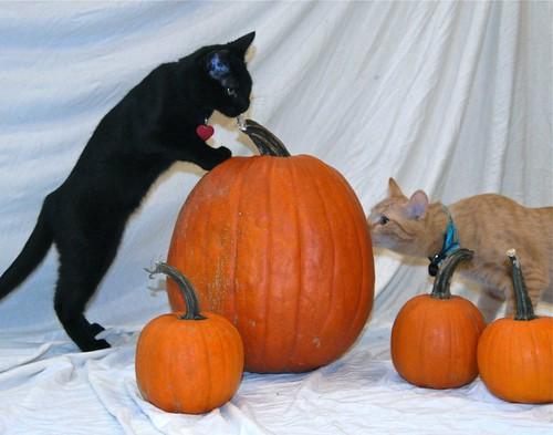 Luna & Beso Investigate