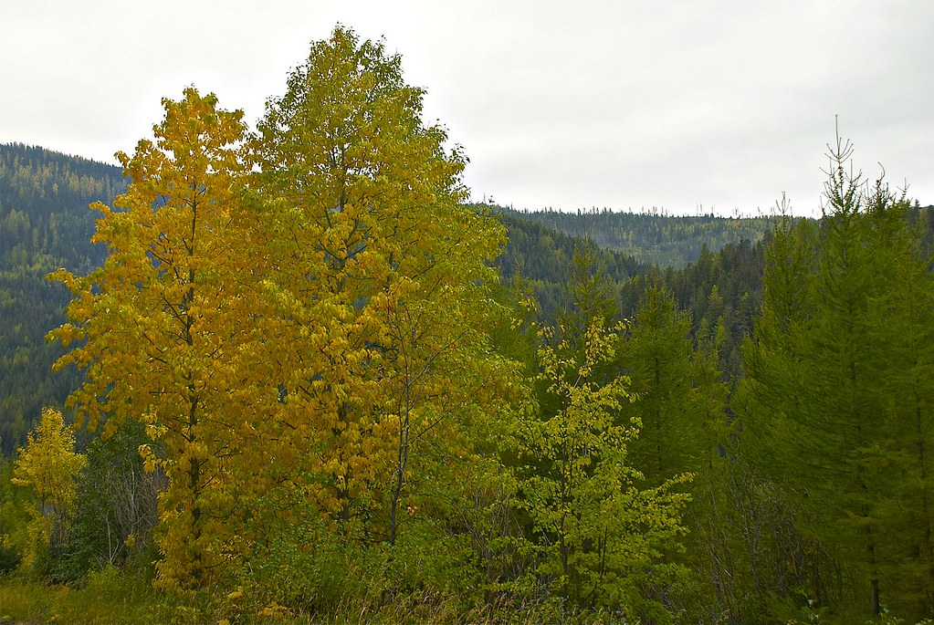Along the Todd Creek trail (345)