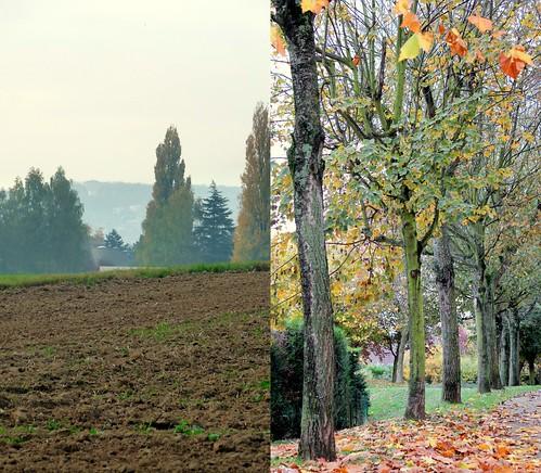 novembre- campi, foglie, viale