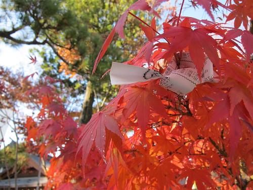 紅葉とおみくじ