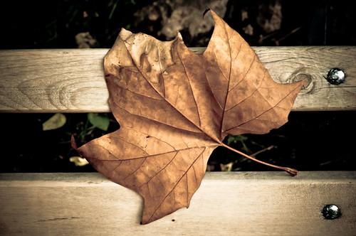 Benched Leaf