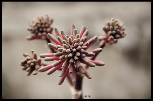95/365 - Im ready to bloom by EcoVirtual