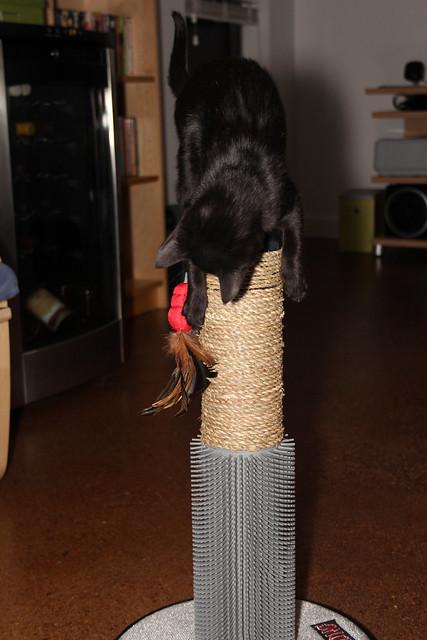 kitties love their scratching post