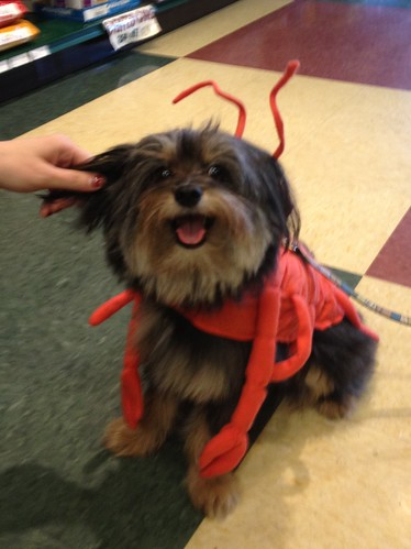 my god is a lobster dog