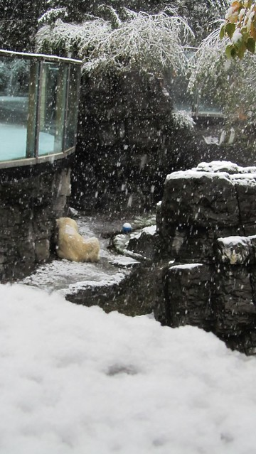 snowtober. polar bear.