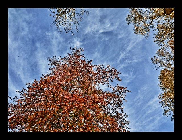 #306/365 Blue Sky and Fall
