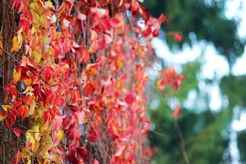 le foglie diventano timide quando arriva l'autunno... by Art Gamila