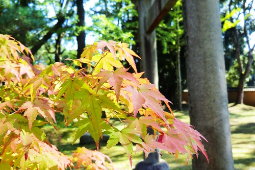 Some Foliage near Kusho Myojin Shrine