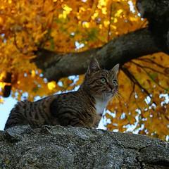 Chat d'automne...