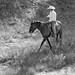 Paso Robles Horse Ranch 18