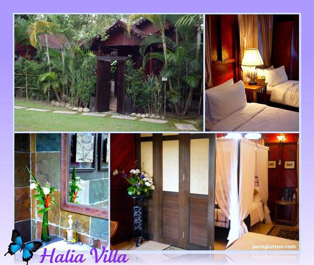 Halia collage