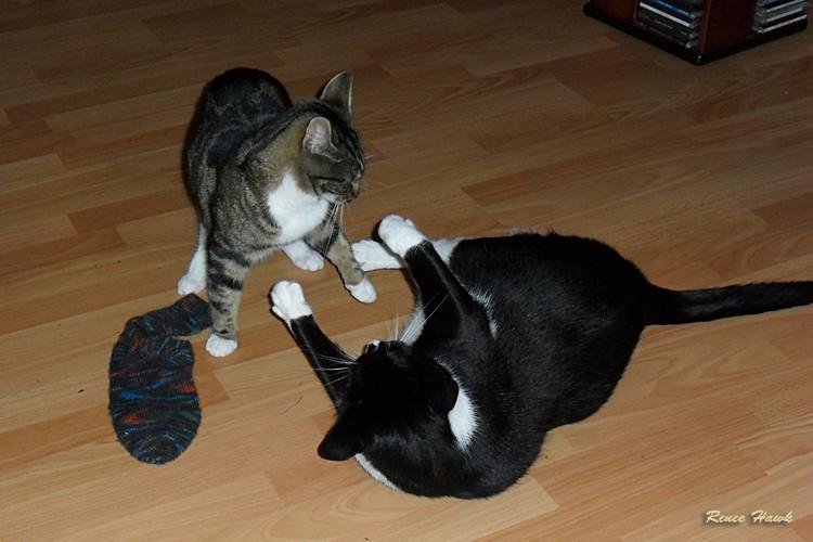 meine Socke
