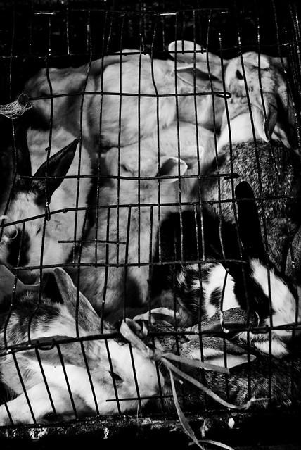 Amman - Caged Rabbits
