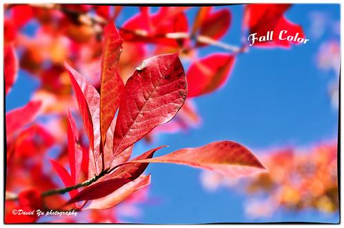 Fall color by davidyuweb