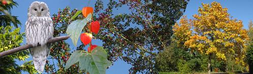 Herbst-Header