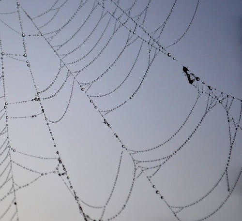 yep more webs