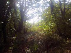 Autumn-Morning,-Queen's Wood '11
