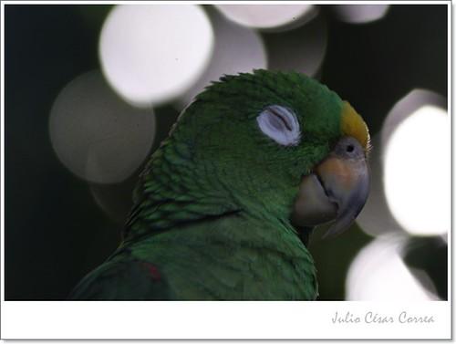 Volutas de pájaro by Julio César Correa