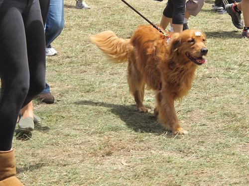 Winner dog!