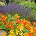 Edible, ornamental, fragrant plantings @ Sunset Magazine Trial Gardens