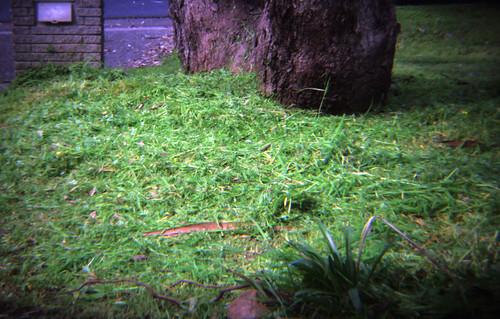 Freshly Cut Lawn (Holga)