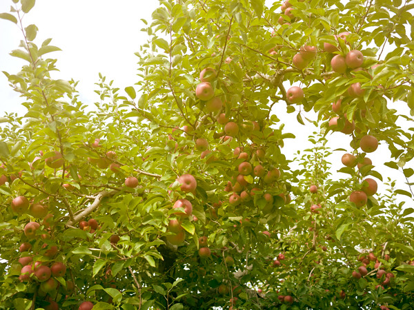 Honey-Pot-Hill-Orchards-2