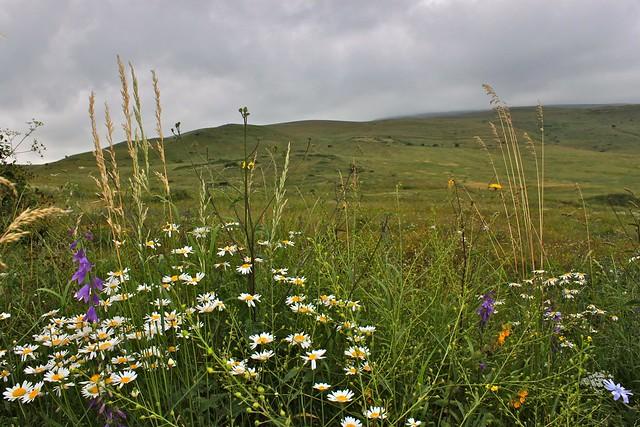 Les fleurs sauvages d'Arménie