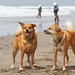Bear & Dozer enjoying the beach