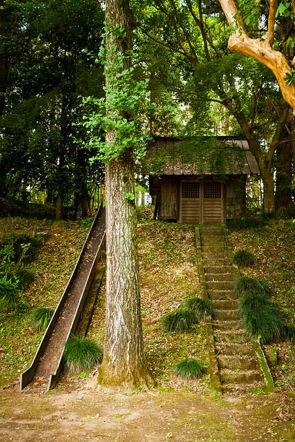 #44 Giant Zelkova of Muryouju Temple