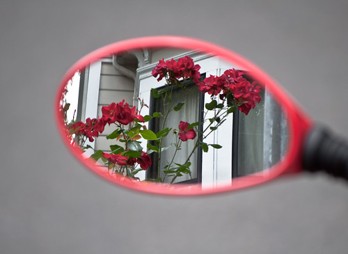 Red Mirror Reflect Red Flowers Blend