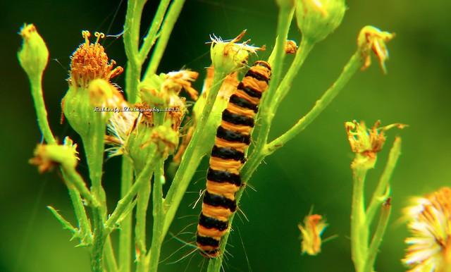 #203/365 Caterpillar