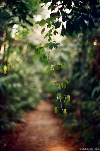 MacRitchie Treetop Walk