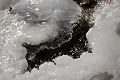 Meduse de glace