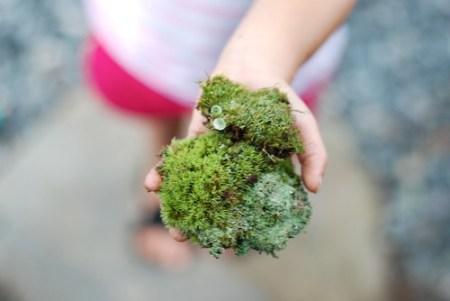 mountain moss