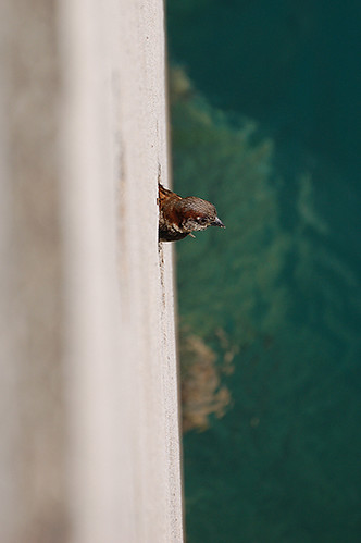 sparrow in wall
