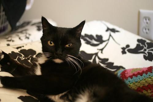 Kitta Cat