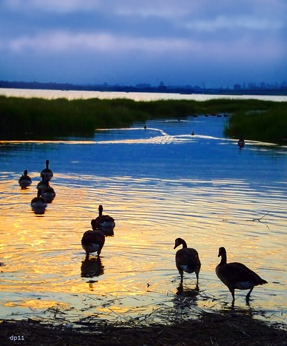 geese at sunset by dppuchol