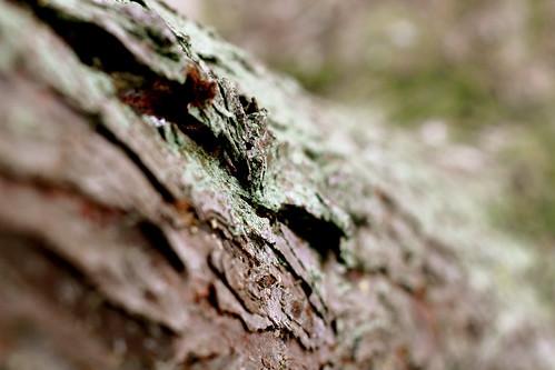 Saturday: lichen