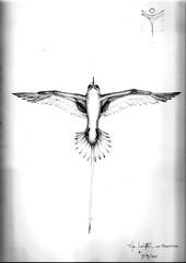 Bermuda Longtail 001