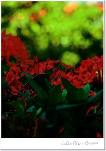 Rojo y verde by Julio César Correa