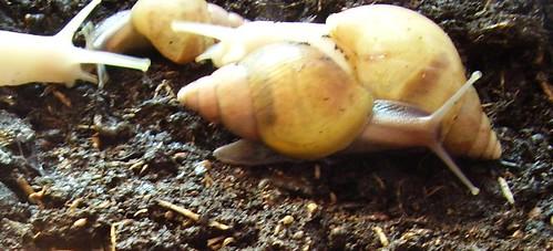 snails 019